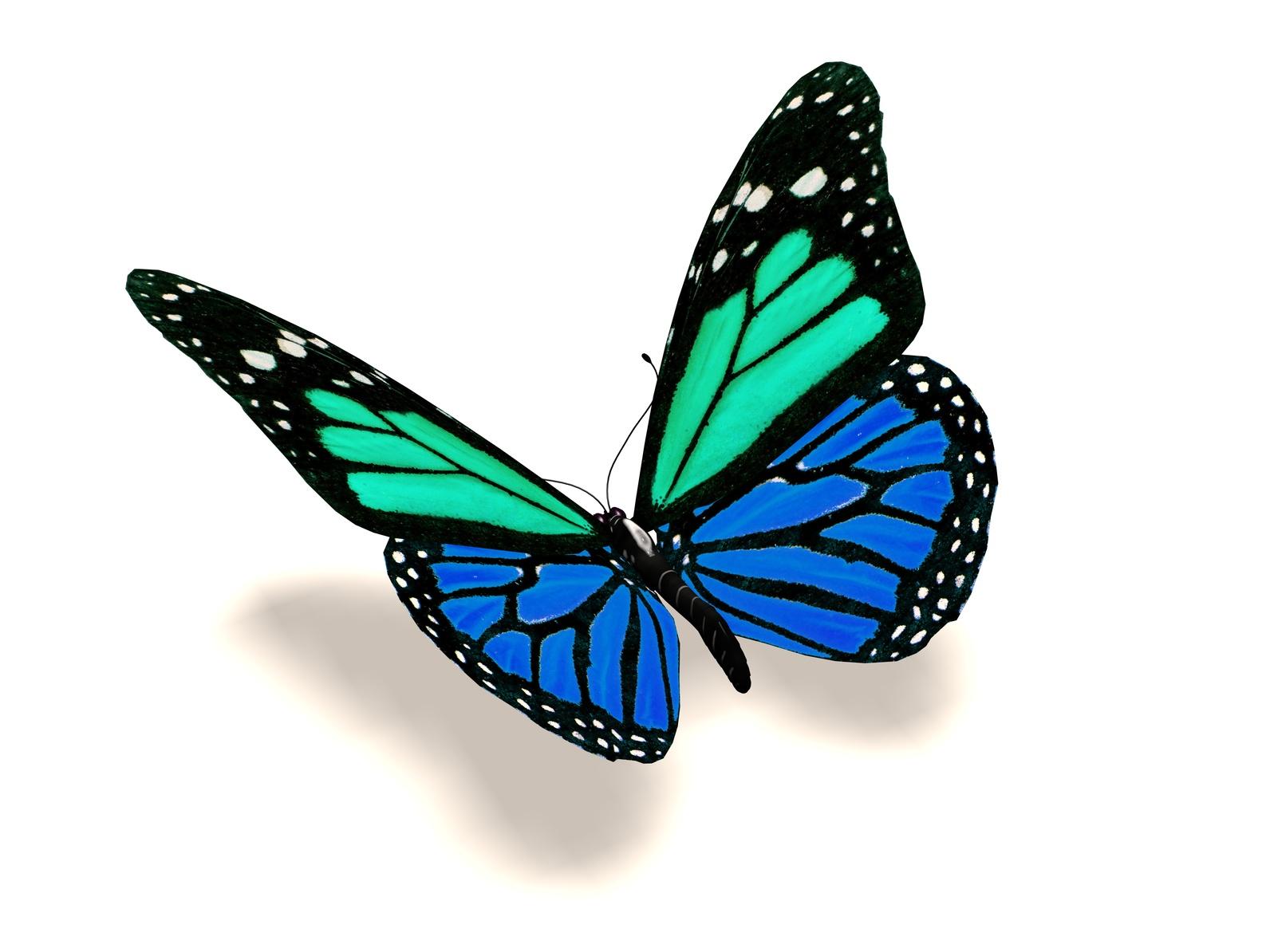 Бабочки 3 д